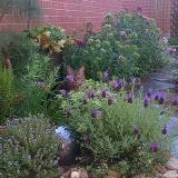 Garden-Tiggy